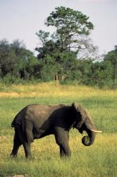 Africa, Bo