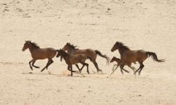 Namibia, A