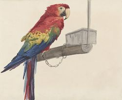 Parrot, by