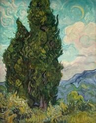 Cypresses,
