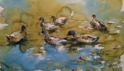 Ducks in t