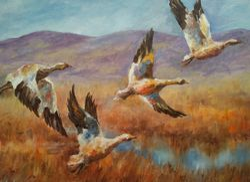 Birds land