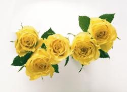 Yellow ros