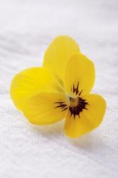 One yellow
