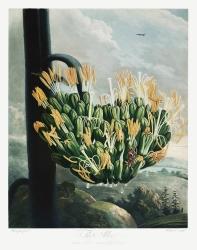 The Aloe (
