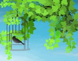 Bird, cage
