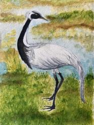 Bird portr