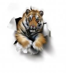 Tiger. Com