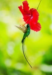 Hummingbir