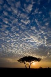 Africa. Ta